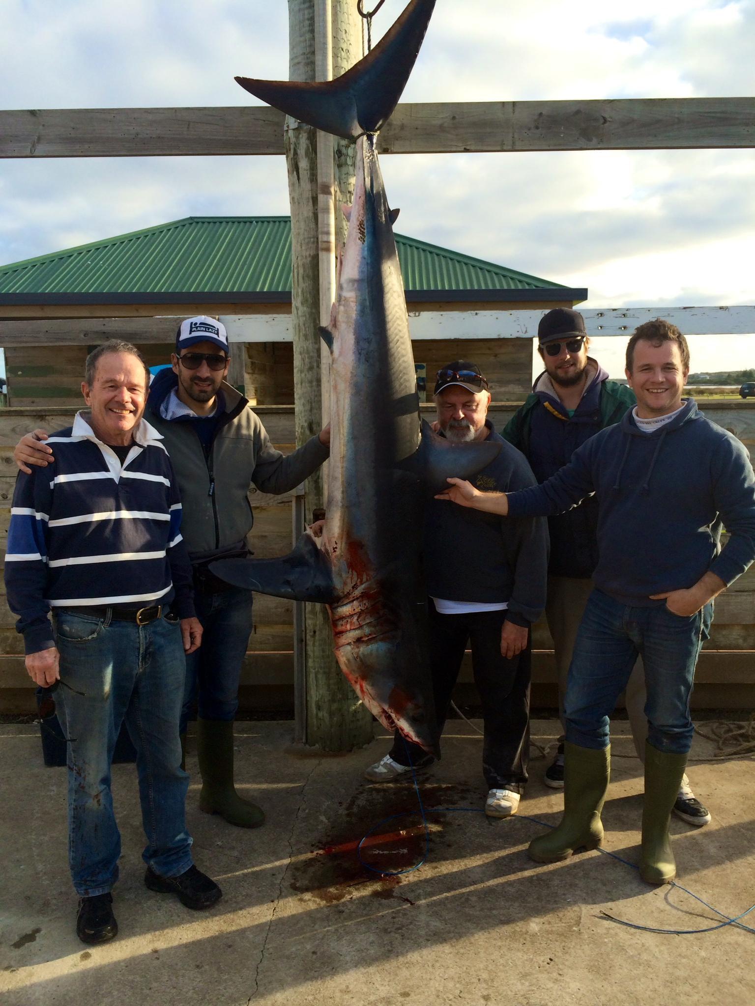 Shark 116 kilos