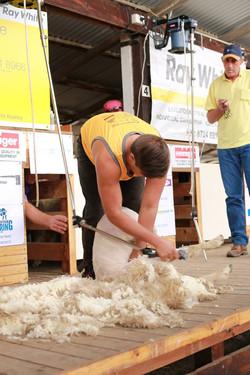 Speed Shearing