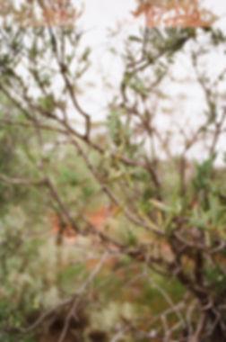 BasiumAustralia-RyanBrabazon 4.jpg