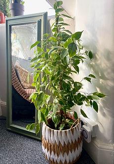 plant 6.jpeg