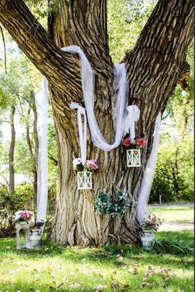 Hidden Valley Downs Tree.JPG