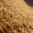 Rice3.png