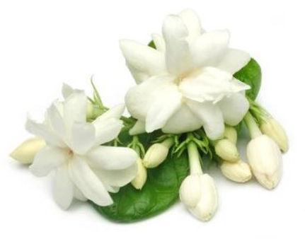 Mali Flower2.JPG
