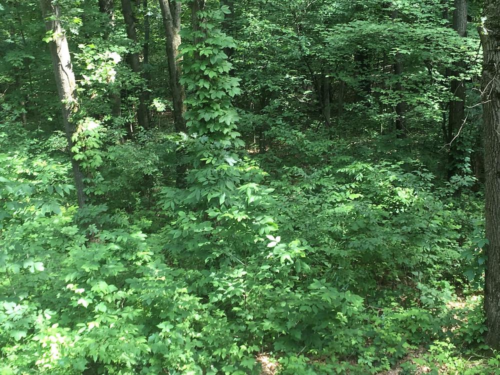 overgrowth trees acerage homestead sscrub brush