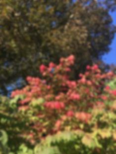 thumbnail_IMG_2377.jpg