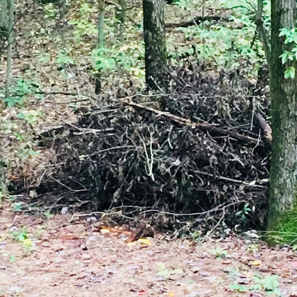 wood pile sticks saplings habitat opossums