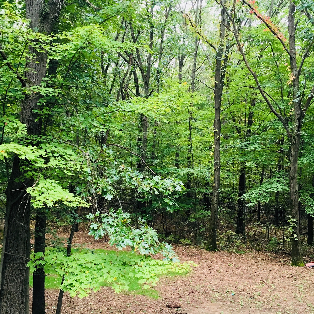 fire break cleared thorn bushes wooded homestead acerage