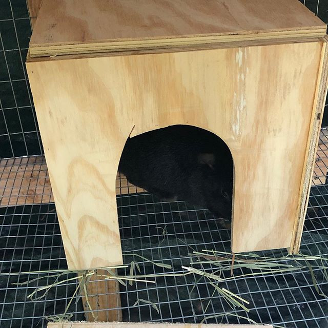 bunny hidding in her hutch