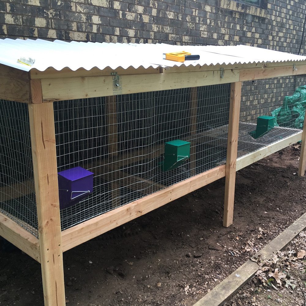meat rabbits hutch cage homestead livestock housing