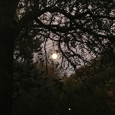 The full moon through the trees. ._.jpg