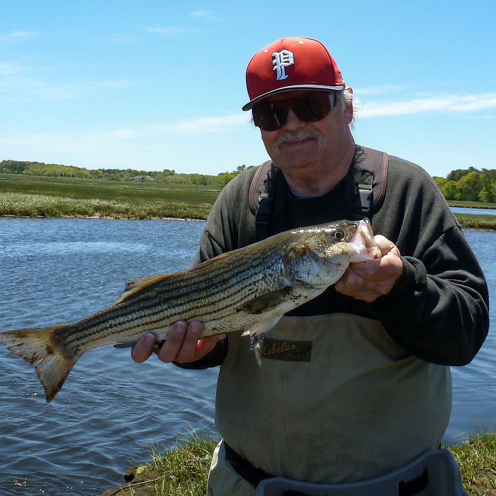My guest, Pete, with a nice schoolie striper.