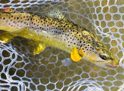 Lose a few flies, catch more trout.