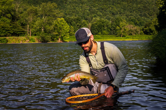 Delaware River Brown Trout