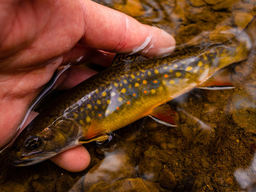 weekly fly fishing review