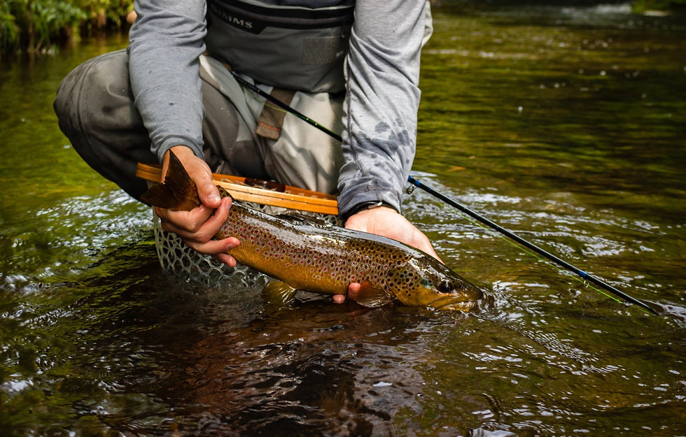 Guided Fly Fishing in Central New York for brown trout