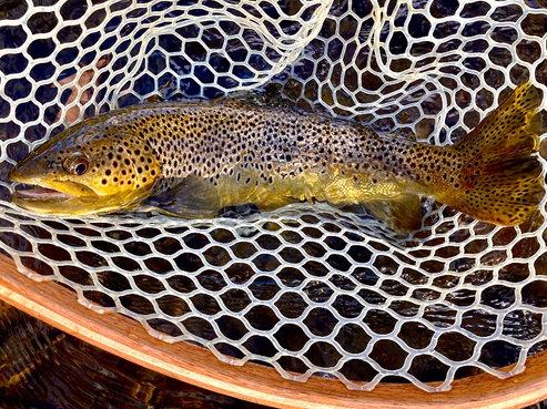 Catskills Fly Fishing