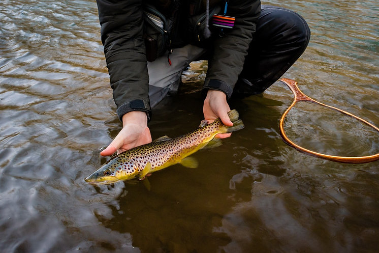 central new york fly fishing for brown trout