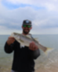 fly fishing for Cape Cod striped bass