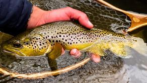Fly Fishing Season Preparations