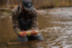 brianbrowntrout_edited.jpg