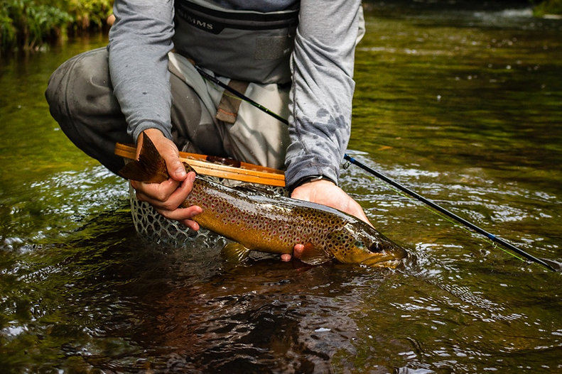guided fly fishing in Upstate New York for wild brown trout