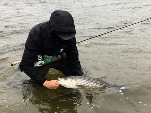 stripers during the nor'easter - pt. 2