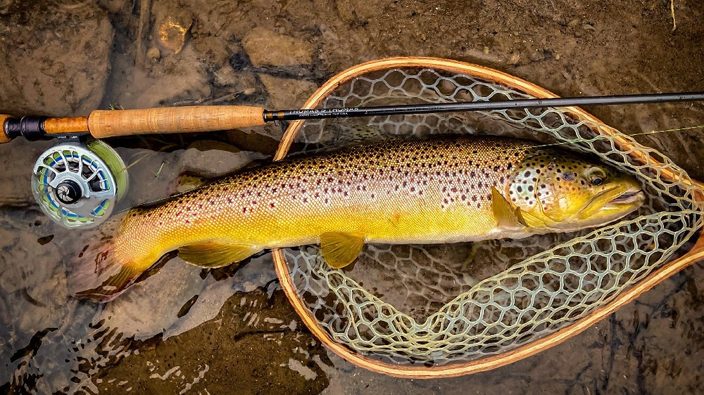 Fly fishing in Upstate New York for brown trout
