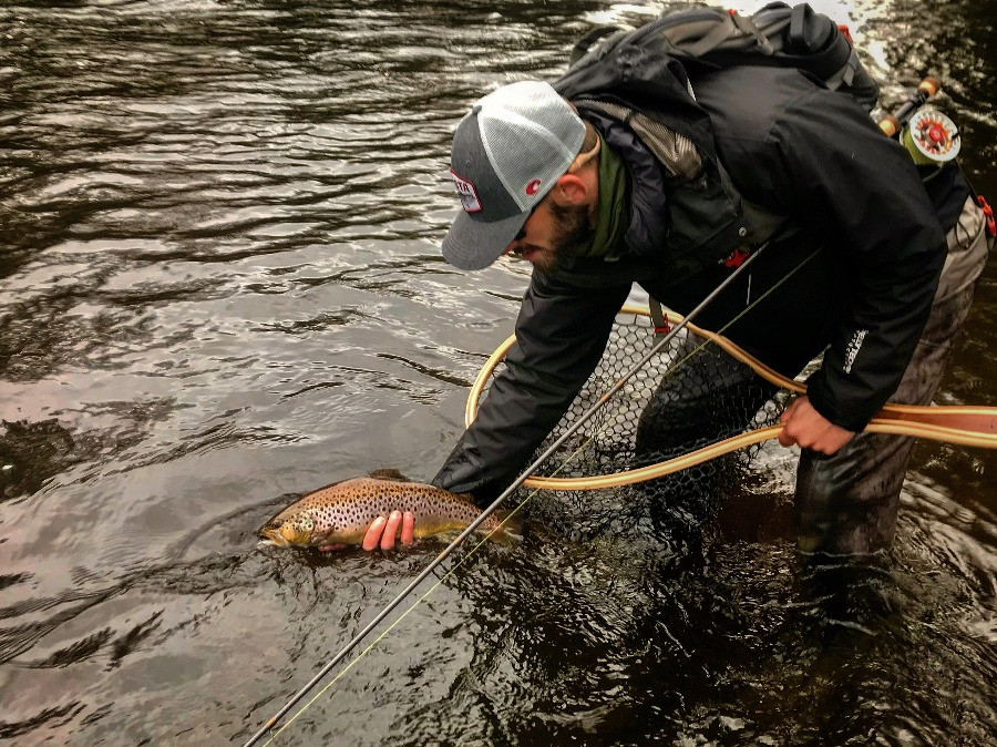 Salmon River brown trout caught fly fishing.