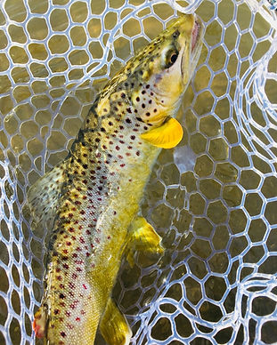guided fly fishing for trout in Syracuse, NY.