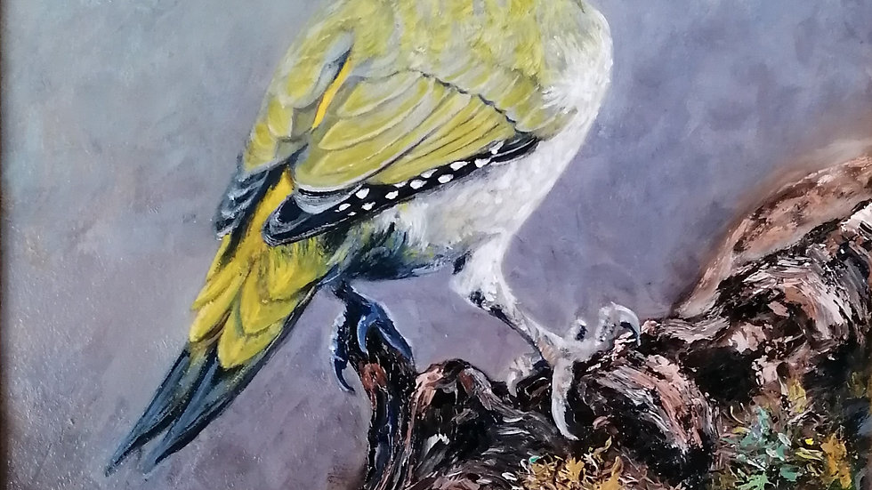 woodpecker (VENDU)