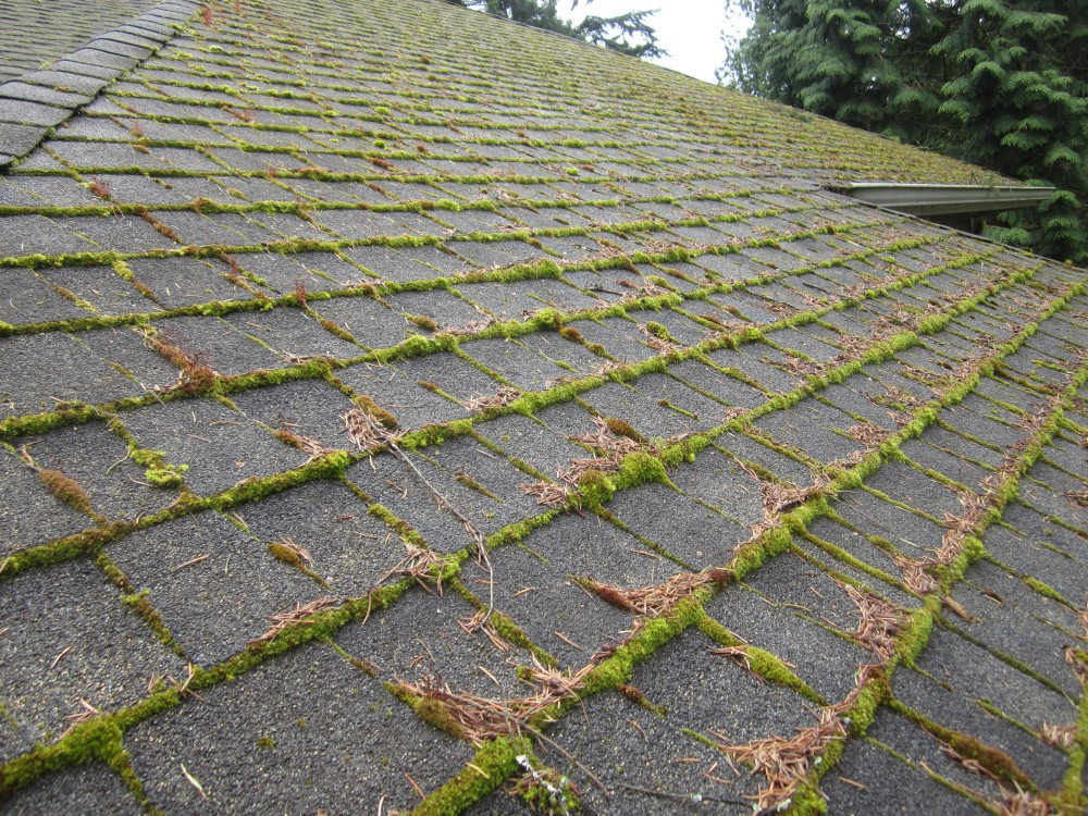 Roof Moss Removal (1500 sq ft)