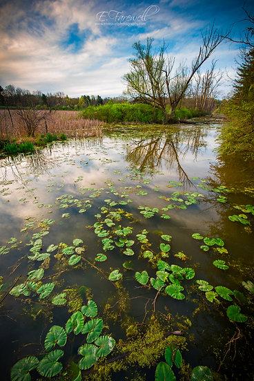 Beaver Marsh Reflection
