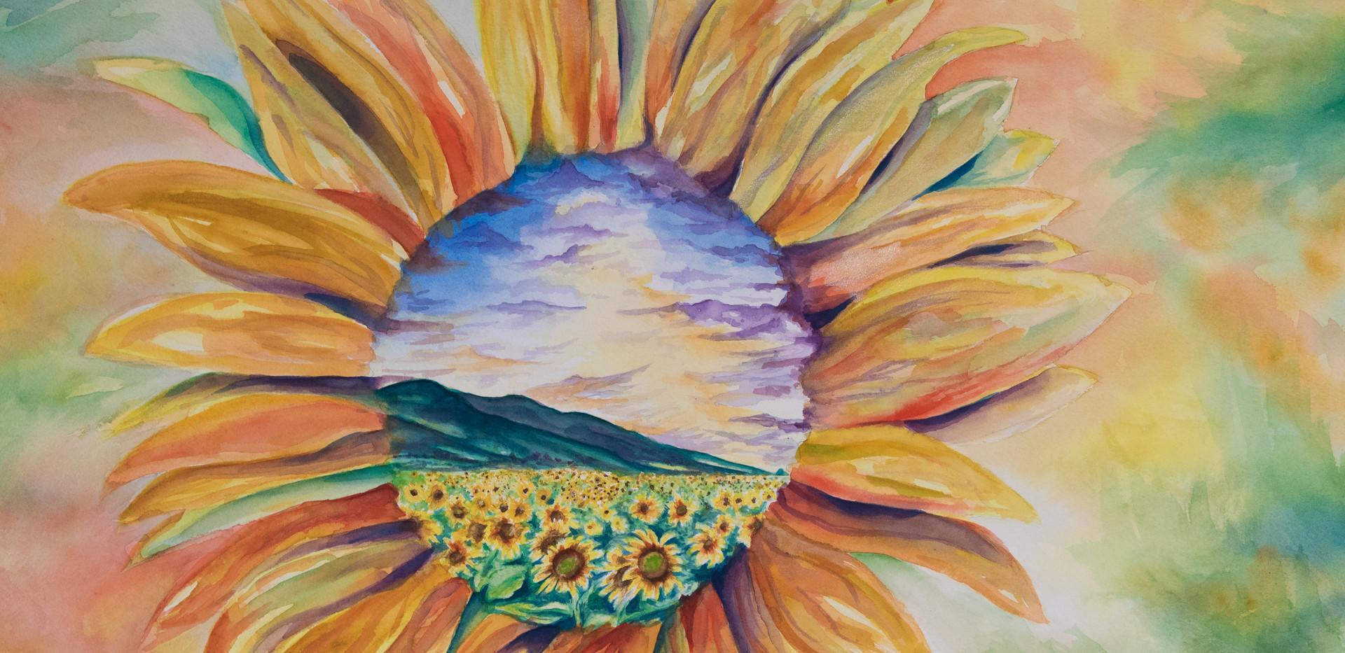 Sunflower (1 of 1).jpg