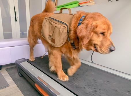 Treadmill Training Your Dog