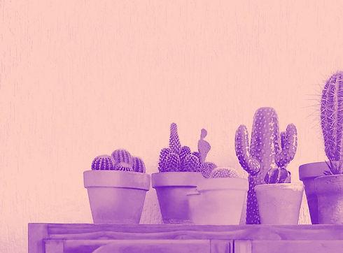 Cacti_edited_edited_edited.jpg