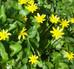 Plantes et fleurs sauvages