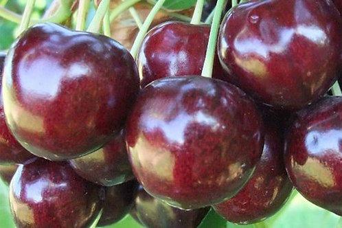 Jubileum Cherry (Tart)