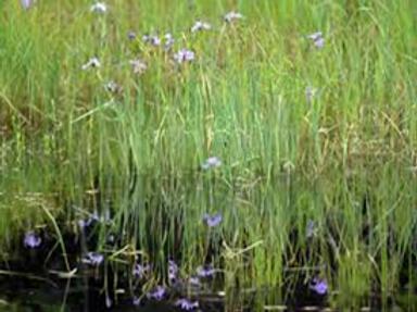 Wetland Garden