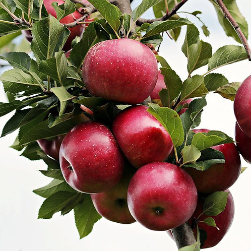 Liberty Apple