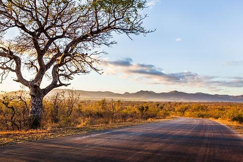 Kruger_Road.jpg