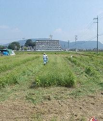 300719草刈前.jpg