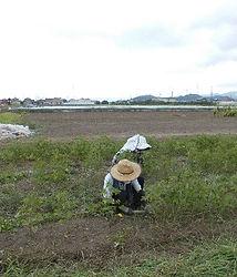 300720草刈り前.jpg