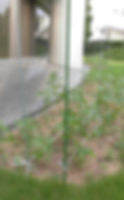 300728庭園5.JPG