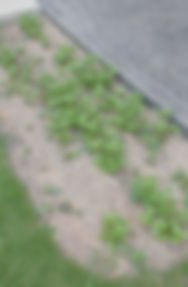 300728庭園4.JPG