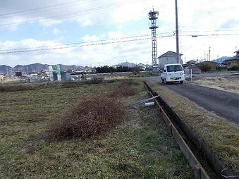 310123畑 茎抜き作業の写真1.jpg