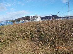 畑(2).jpg