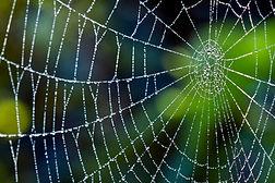 spiderweb_1050x700.jpg