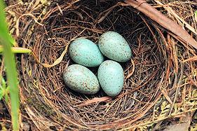 nest-eggs-5bfc1f2cc9e77c005141a39e.jpg