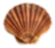 kisspng-seashell-scallop-sea-shell-5a736