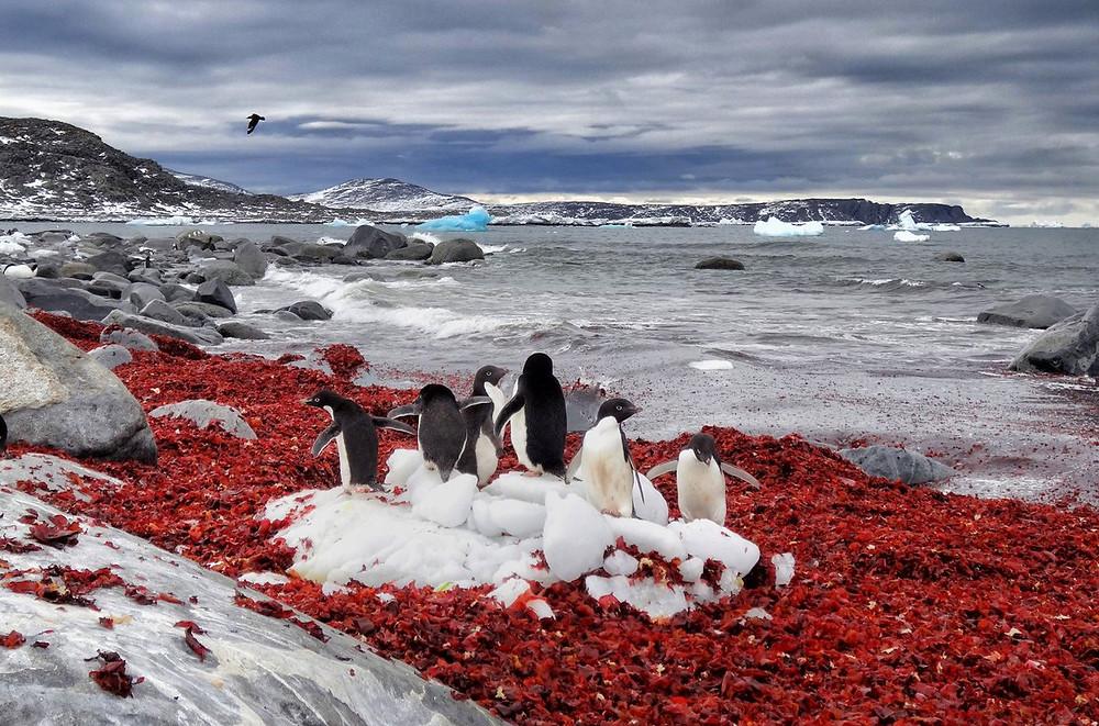 penguins, Antarctica,